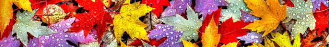 faixa - fallen leaves