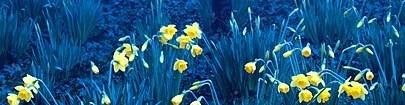 faixa flores na mata [3]